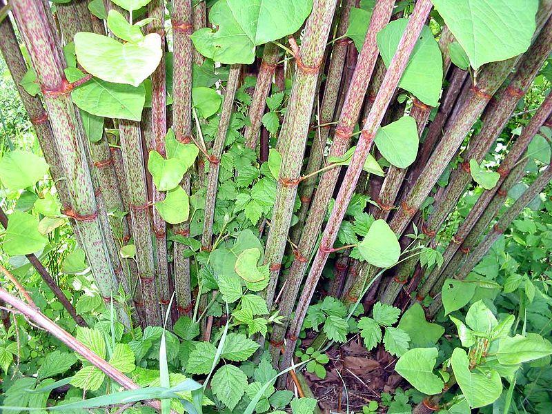 Cannabis Leaf Symptoms amp Plant Problems  Marijuana